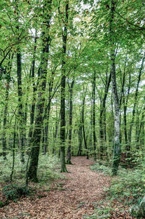Path-between-trees-fageda-jorda