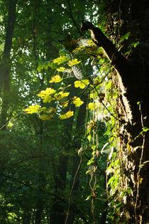Lichtzauberfruehherbstwald