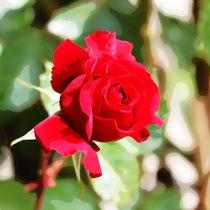 rote Rose I by Uwe Ruhrmann
