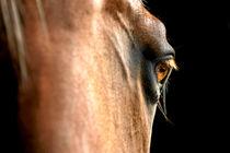 Pferdeauge Quarter-Mix-Stute von cavallo-magazin