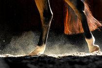 Schweif-Spiel by cavallo-magazin