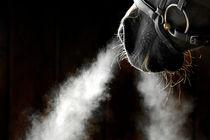 Pferd mit Trense von cavallo-magazin