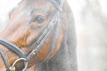 Töltender Traber by cavallo-magazin