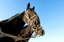 Seenotrettung mit Pferden von cavallo-magazin