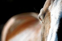 Pferd im Abendlicht by cavallo-magazin