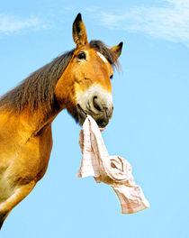 Pferd apportiert von cavallo-magazin
