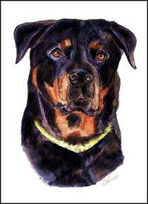 ~ Rottweiler Portrait ~ von Sandra Vollmann