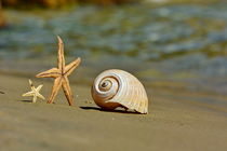 The Shell by Sorin Lazar Photography