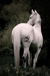 Holsteiner Cayenne by Anja Sieczkarek
