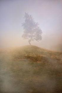 Loneliness at foggy dawn by Jarek Blaminsky