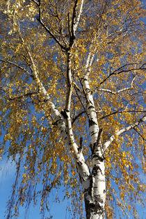 Autumn tree by feiermar