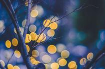 Petzval-Lichter von goettlicherfotografieren