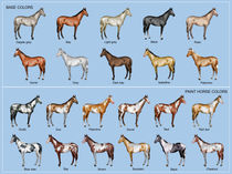 Horse color chart by William Rossin