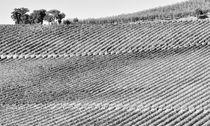 Weinberge Toskana Italien / vineyards landscape Tuscany by Thomas Schaefer  (www.ts-fotografik.de)