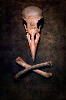 Birdie von Jarek Blaminsky