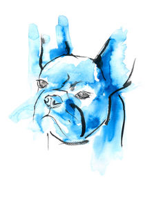 Blue-animals-franz-bulldoge