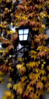 Herbstlicht - Autumn light von Chris Berger