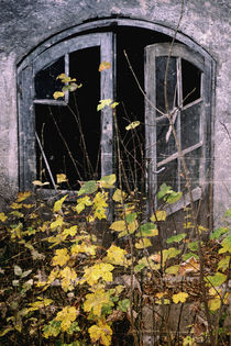 'Herbst - View of an old house' by Chris Berger