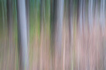 Forest Blur by Martin Williams