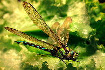 Golden dragonfly by Yuri Hope