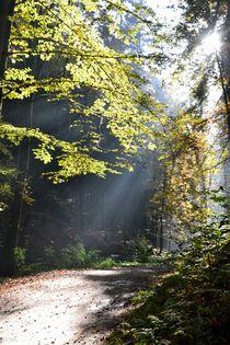 Waldwanderung by Ute Bauduin