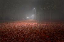 Red Leaves Park Avenue at Night by Gerhard Petermeir