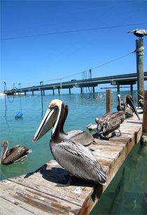 Pelikane am Strand von Florida Keys by Marita Zacharias