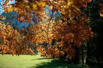 Herbstlaub von Ive Völker