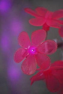 Pink-christmas-9