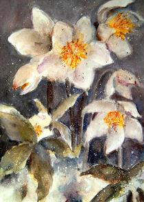 'Christrose - Snow Rose' von Chris Berger