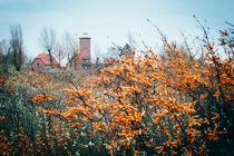 Leuchtturm und Sanddorn von Ruby Lindholm
