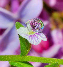 Flowers in a drop on the background of lilac by Yuri Hope