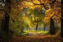 'Herbstliche Allee' von Simone Rein