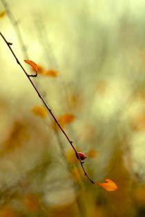 Mit Licht durchflutet III by © Ivonne Wentzler