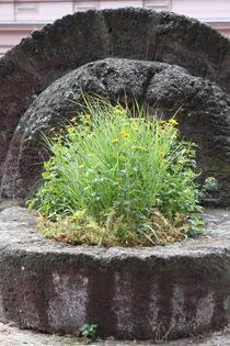 Pflanze von Bernd Eglinski