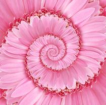 Flower-droste