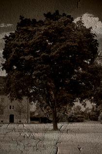 Der alte Baum  by Bastian  Kienitz