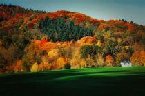 Autumn223