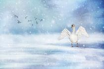 Img-1069aaaa-sneeuw-bb-mooiste
