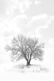 Lone Tree by J Nathaniel Dicke
