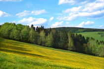 Landschaft-wald-wiese