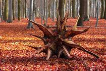 wood von franziskus