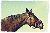 Pferd-2015-10-002-cut-6000i