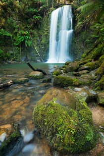 Rainforest waterfalls, Beauchamp Falls, Great Otway NP, Victoria, Australia by Sara Winter