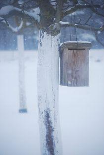 Winter223