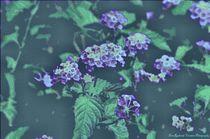 Butterflyblooms1c
