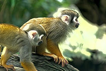 Squirrel monkeys by Andrew Michael
