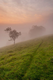 Track-to-the-mist
