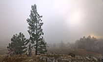 Fog-in-the-forest-i