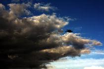 Storm Crow by Bill Covington